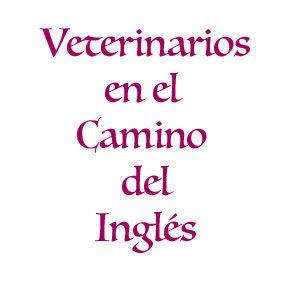 Veterinarios del Camino Inglés